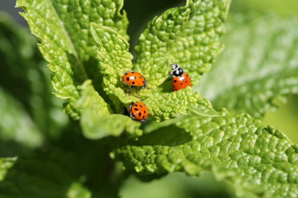 graphic of ladybug on leaf